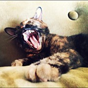 Feline Art - Kitty Roar by Natasha Marco