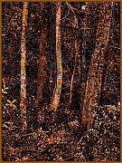 Wooded Digital Art Framed Prints - Klimts Forest Framed Print by Terry Rogers