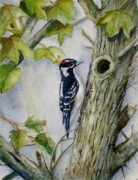Woodpecker Paintings - Knock Knock by Patricia Pushaw