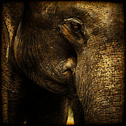 Elephant Framed Prints - Knowing Framed Print by Andrew Paranavitana
