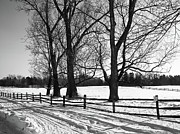 Park Scene Originals - Knox Farm 2150 by Guy Whiteley
