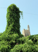 Green Day Art - Knoxville Kudzu by Giffin Photography