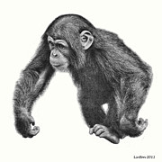 Chimpanzee Digital Art Prints - Knuckle Walking Print by Larry Linton