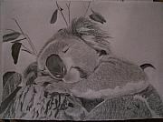 Koala Drawings - Koala Bear Sleeping Original Pencil Sketch By Pigatopia by Shannon Ivins