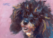 Poodle Paintings - Kodas Curls by Kimberly Santini