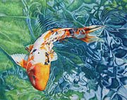 Ripples Drawings Posters - Koi Carp Poster by Abby Hope Skinner