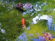 Koi Painting Posters - Koi in Reflective Water Garden Poster by Jerry  Grissom