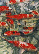 Fish Swimming Prints - Koi Karp Print by Gareth Lloyd Ball