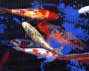 Tall Ships. Marine Art Paintings - Koi Pond by Phil Cusumano