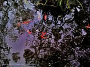 Pond Greeting Cards Digital Art - Koi Reflections Evening by Jamey Balester