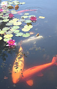 One Planet Infinite Places Digital Art - Koi by Steve Huang