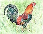 Marionette Paintings - Kokee Rooster by Marionette Taboniar