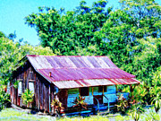 Haleiwa Paintings - Kona Coffee Shack by Dominic Piperata