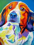 Kooikerhondje Framed Prints - Kooiker - Dakota Framed Print by Alicia VanNoy Call