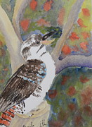 Pamela  Meredith - Kookaburra Sitting in...