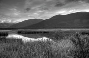 British Columbia Photo Originals - Kootenay Marshes In Black And White by Lawrence Christopher
