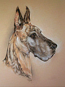 Great Drawings - Kosmo by Pamela Whyman