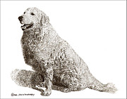 Bold Drawings Prints - Kuvasz named Pax Print by Jack Pumphrey