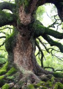 Tree Roots Photos - Kyoto Temple Tree by Carol Groenen