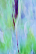 Impressionist Photos - L Epi by Variance Collections