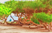 Old Man Digital Art Originals - La Jolla California by Angela A Stanton