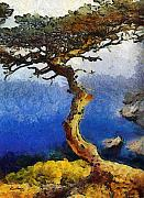 Tree Paintings - La Jolla Torrey Pines  by Russ Harris