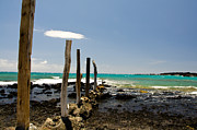 La Perouse Bay Prints - La Peroues Fence Print by Keith Ducker