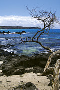 Perouse Prints - La Perouse Bay Print by Keith Ducker