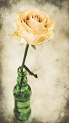 Delicate Bloom Posters - La rose Poster by Angela Doelling AD DESIGN Photo and PhotoArt