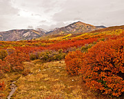 La Sal Autumn Print by Bob and Nancy Kendrick