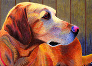 Labrador Retriever Drawings - Lab Mix - Snoose by Annie Nelson