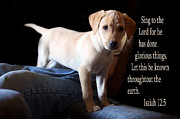 Bible Photos - Labadore Puppy Is. 12v5 by Linda Phelps