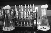 Pharmacology Framed Prints - Laboratory Flasks And Test Tubes Used Framed Print by Everett