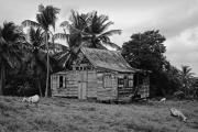 Old House Photos - Laborie House- St Lucia by Chester Williams