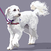 Dogs Digital Art - Labradoodle on a Lead by Kris Hackleman