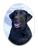 Labrador Digital Art - Labrador Retriever 133 by Larry Matthews