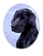 Retriever Digital Art - Labrador Retriever 227 by Larry Matthews
