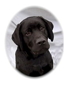 Labrador Digital Art - Labrador Retriever 504 by Larry Matthews