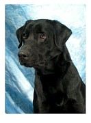 Retriever Digital Art - Labrador Retriever 632 by Larry Matthews