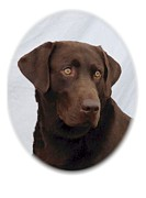 Retriever Digital Art - Labrador Retriever 651 by Larry Matthews