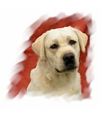 Labrador Digital Art - Labrador Retriever 798 by Larry Matthews