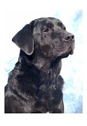 Retriever Digital Art - Labrador Retriever 821 by Larry Matthews