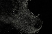 Labrador Digital Art - Labrador Retriever by EricaMaxine  Price
