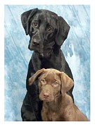 Labrador Digital Art - Labrador Retrievers 645 by Larry Matthews