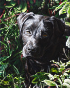 Labrador Originals - Labradorable by Cara Bevan