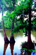 Cypress Knees Photos - LaCassine Bayou by Thomas R Fletcher