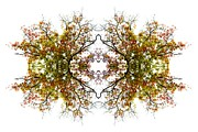 Kaleidoscope Photos - Lace by Debra and Dave Vanderlaan