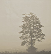 In The Fog Photo Posters - Lace Poster by Odd Jeppesen