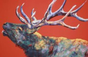 Elk Pastels - Ladies Come Back by Celene Terry