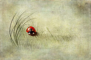 Insect Mixed Media Prints - Lady Bird Print by Svetlana Sewell
